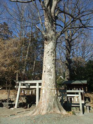 八雲神社5