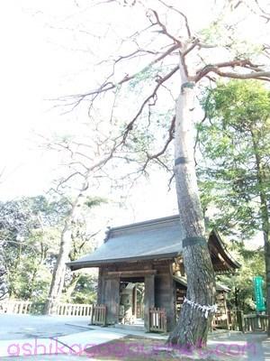 唐沢山神社46