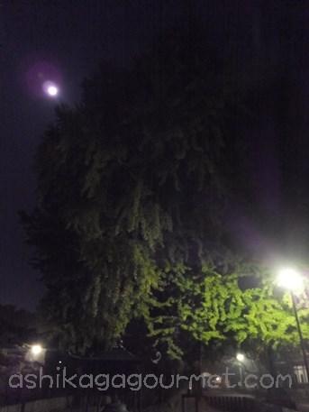 夜の鑁阿寺7