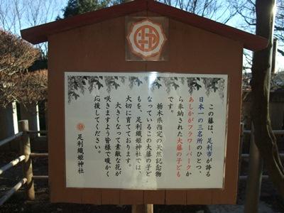 織姫神社H25正月22