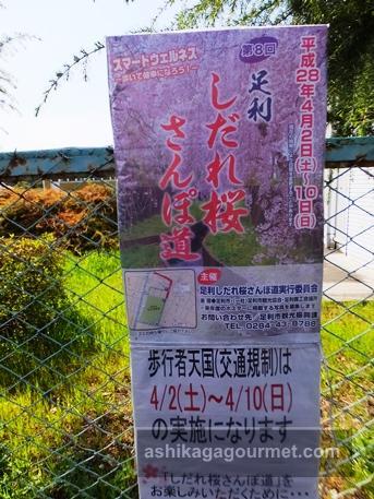 枝垂れ桜さんぽ道2016-1