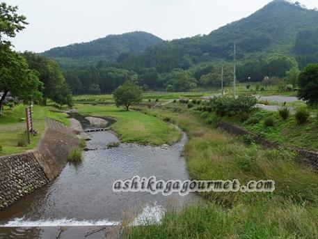 自然観察おすすめスポット2 ~名草川 江保地橋下